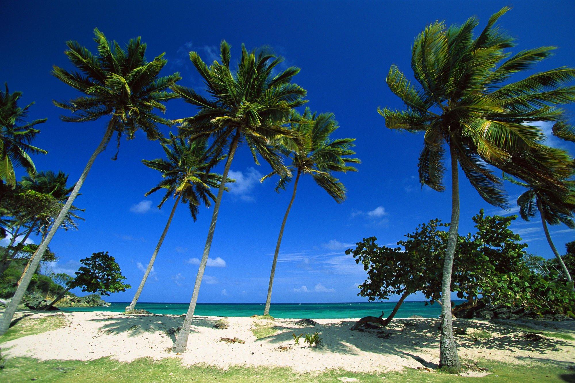 образец заполнения туристической карты в доминикану