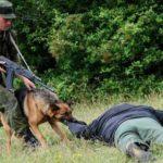 Последствия незаконного пересечения государственной границы Российской Федерации